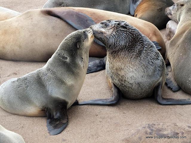 focas enamoradas
