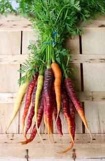 bundle of carrots in growing carrots