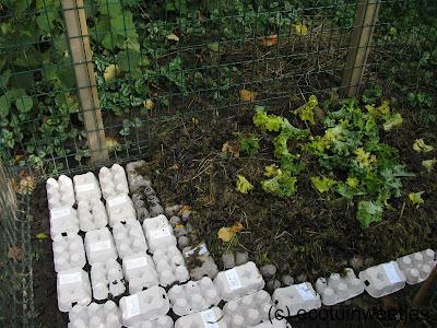 composthoop, composteren, eierdoos, karton, moestuin, tuintip, ecotuintip