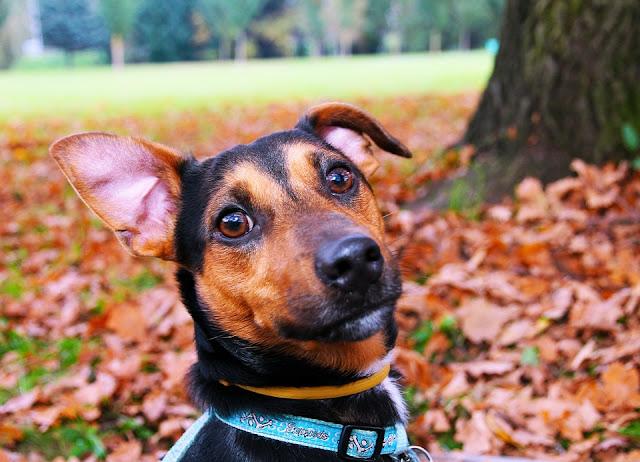 akcesoria spacerowe dla psa