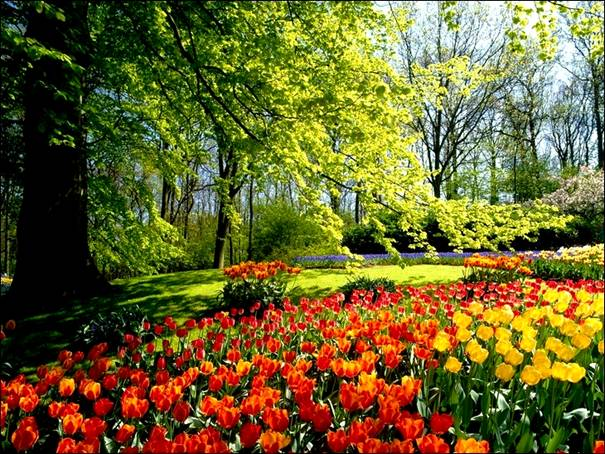 مزارع الزهور image028-779294.jpg