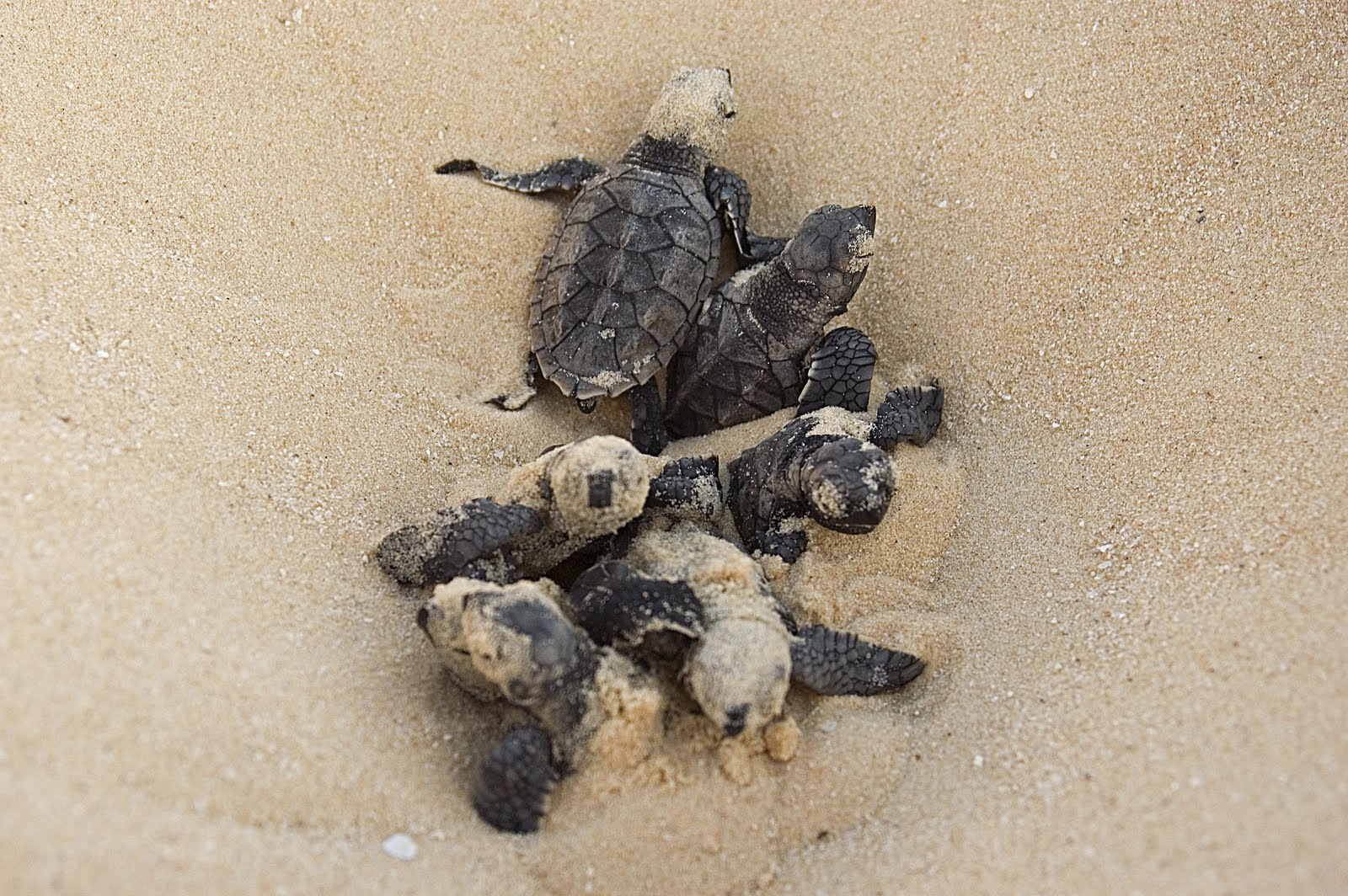 Best Food For Baby Turtles