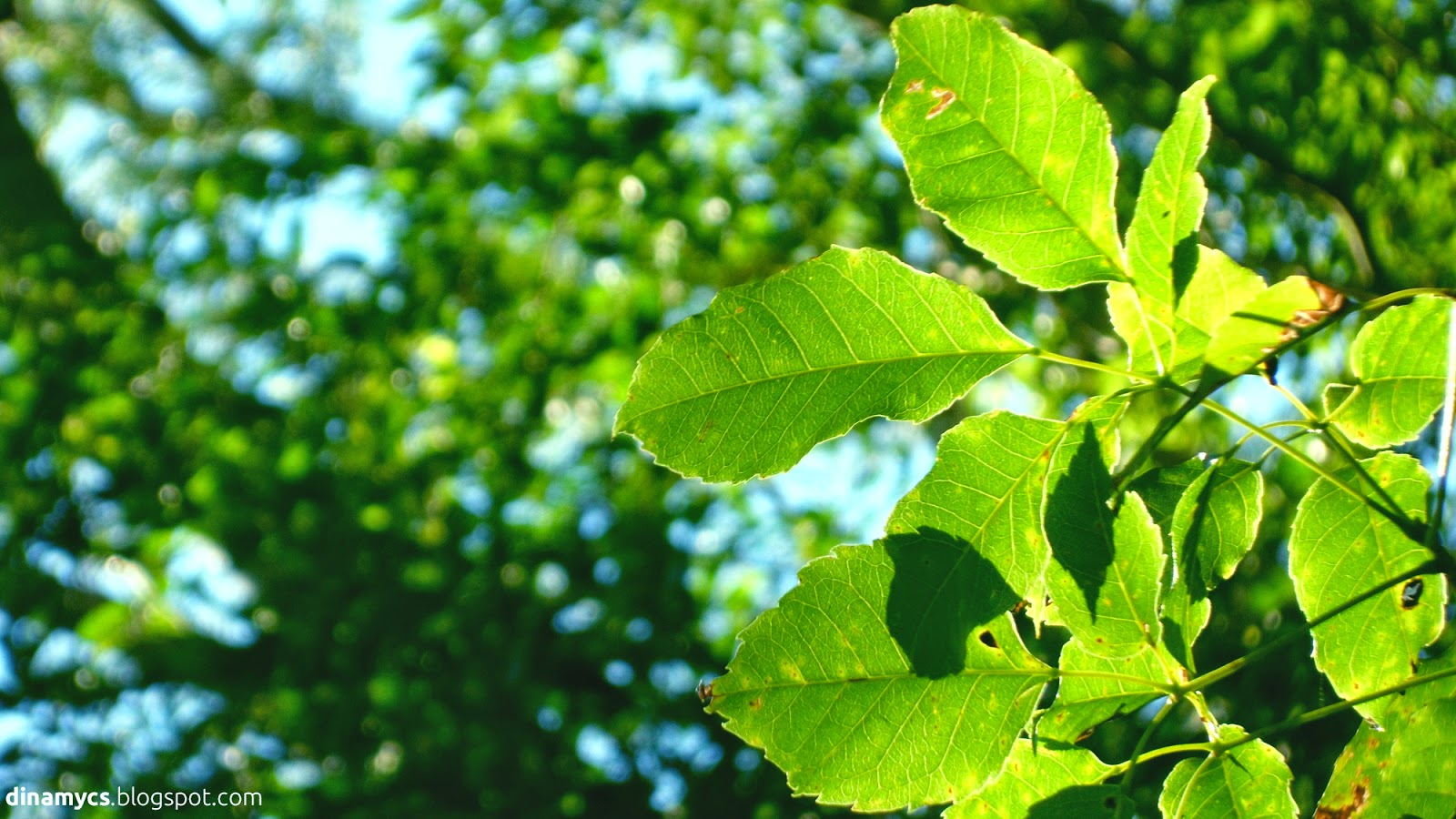 green leaves wallpaper  - hojas de lapacho