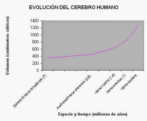 Evolución del volumen del cerebro humano