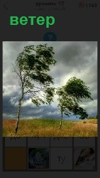 сильный ветер сгибает деревья к земле и гонит тучи на небе