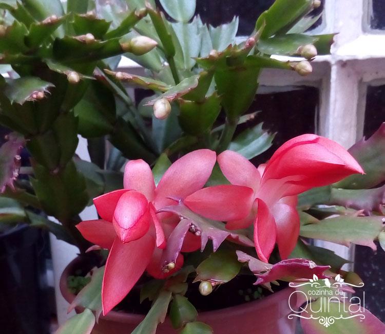 Flores de Maio!! Lindíssimas!!