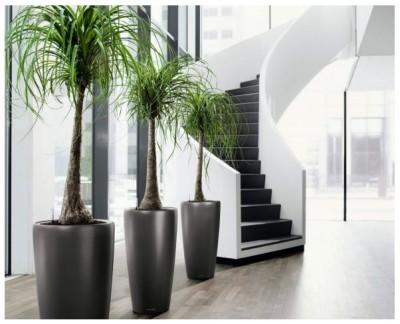son muchas las plantas para jardines interiores solo procura imitar las condiciones con que crecen en la naturaleza