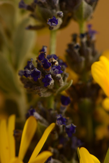 lavender, goodwins creek gray,  desert garden, small sunny garden, amy myers, photography, monday vase