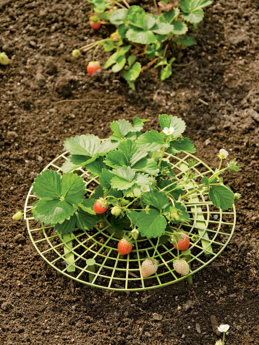 Grow your own vegetables everything about garden for Grow your own vegetable garden