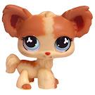 Littlest Pet Shop Pet Pairs Chihuahua (#765) Pet