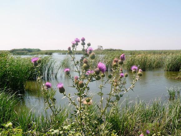 Річка Вовча. Ландшафтний заказник «Бакаї»