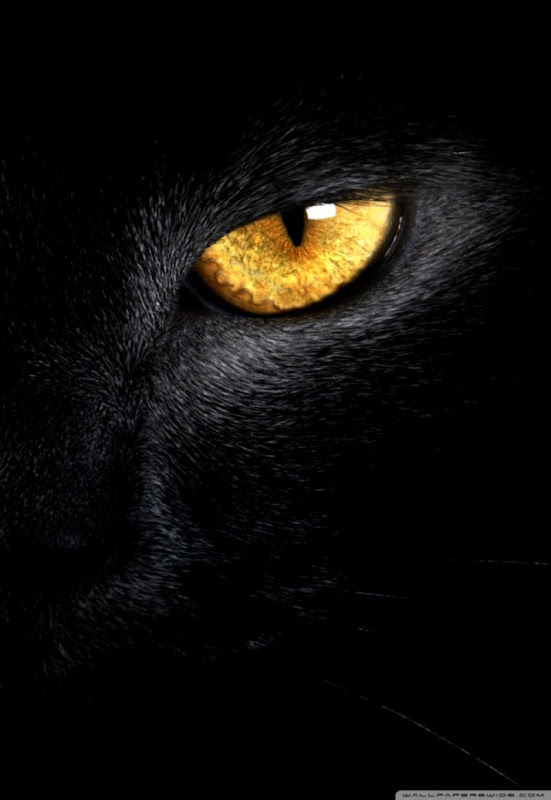 Black Cat Eyes Yellow Hd Wallpaper Carik Wallpapers