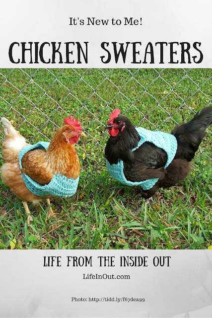 Is a chicken sweater a novelty item for pet chickens or something savvy chicken owners crow about? Read on to find out!