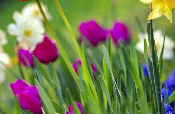consejos plantas primavera