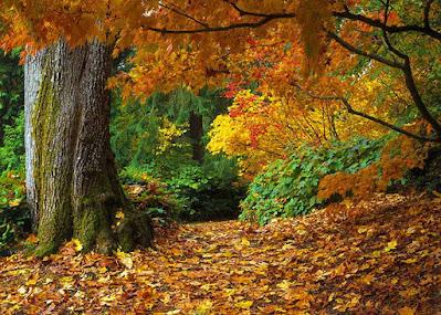 صور عن الخريف 2020خلفيات تساقط ورق الاشجار جميلة جدا