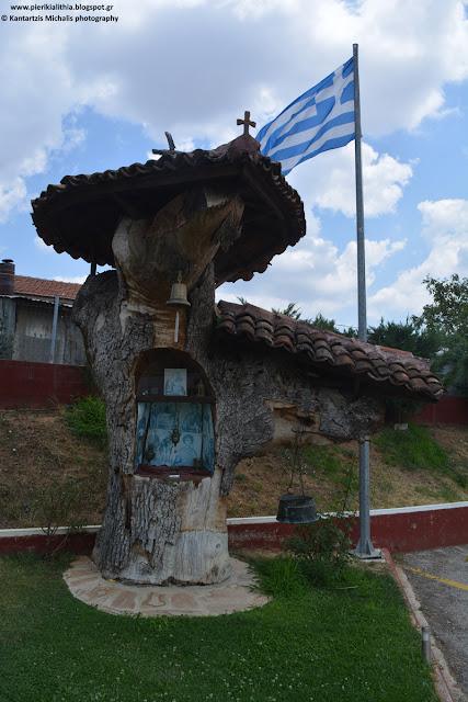 Το εκκλησάκι μέσα στο... δέντρο.