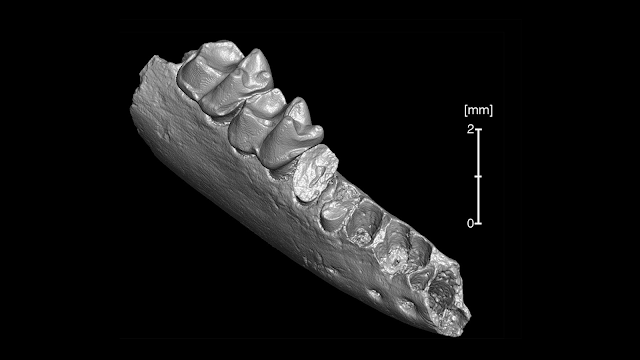 Oldest-known ancestor of modern primates may have come from North America, not Asia