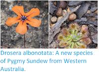 https://sciencythoughts.blogspot.com/2018/12/drosera-albonotata-new-species-of-pygmy.html