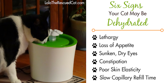 six signs your cat may be dehydrated