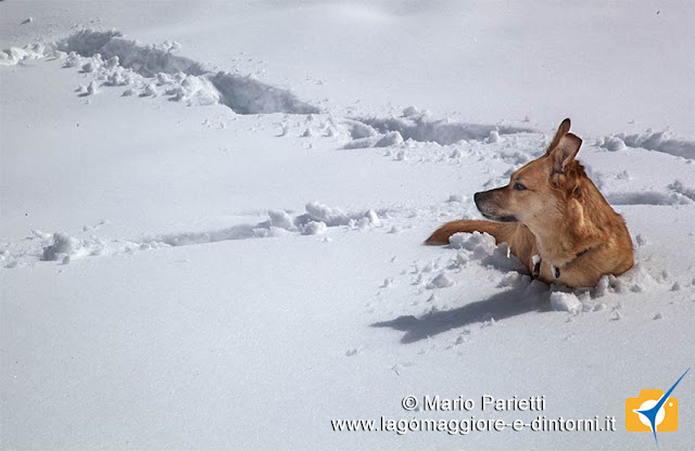 Ambra si diverte nella neve