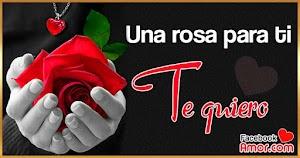 Imágenes de Rosa rojas con frase de amor