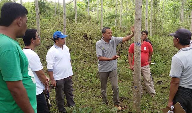 Aceh Siap Ekspor Kayu Jabon