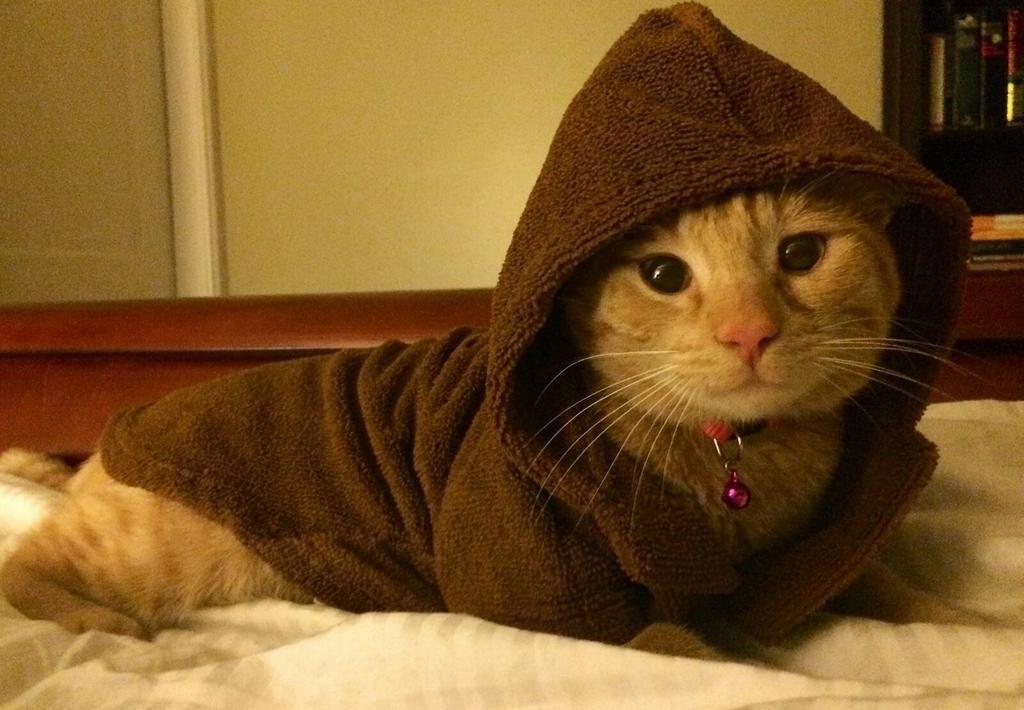 Choosing persian cat tips