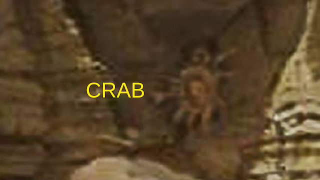 Crab on Mars stuns everyone.