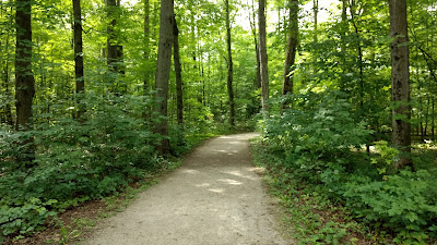 A wide, flat trail at Crawford Lake Conservation Area