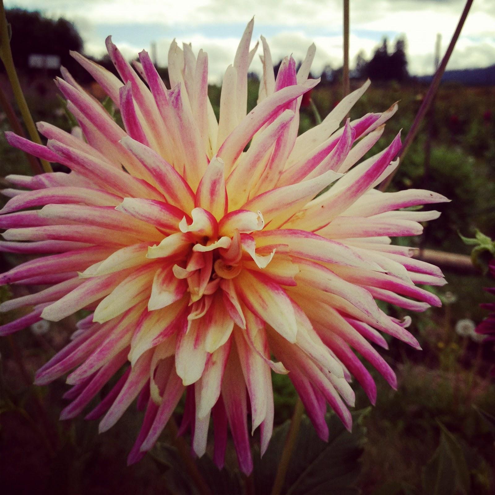 Make Your Own Wedding Flowers: Random Thoughts In Random World: Handmade Wedding: Make