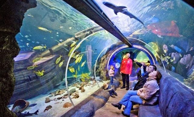 Aquaria Sea Life Orlando en I-Drive 360