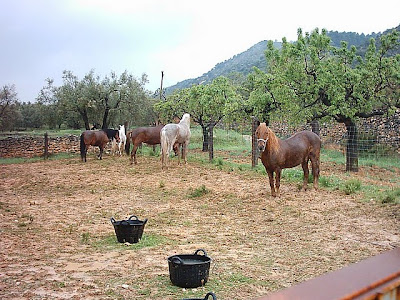 los olivares ,camino ,pantano de Pena, caballos