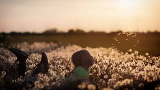 child lying in field blowing dandelions