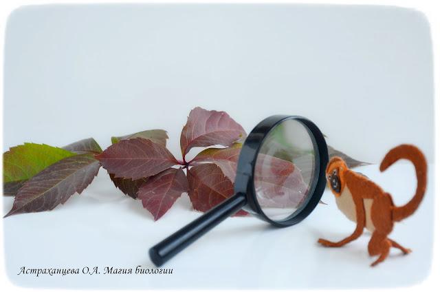 магия-биологии-осенние-игры-листья-эксперимент-мартышка-пальчиковая-игрушка