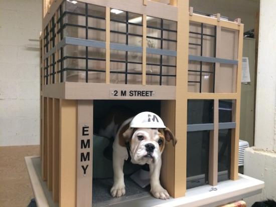 Ideas de dise o casetas de perro originales revista for Estilo arquitectonico que usa adornos con plantas y animales