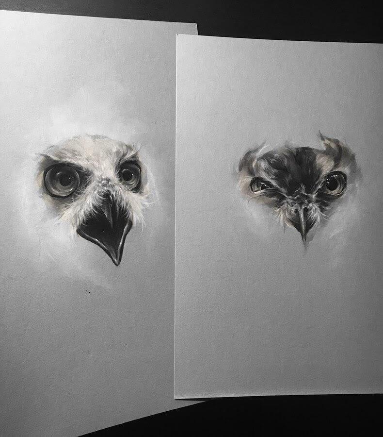 01-Birds-of-Prey-SW-Whiteside-www-designstack-co