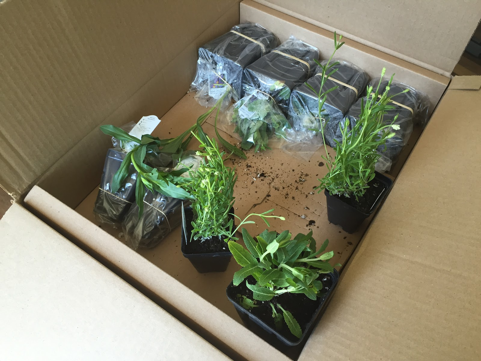 Plants Came In The Mail