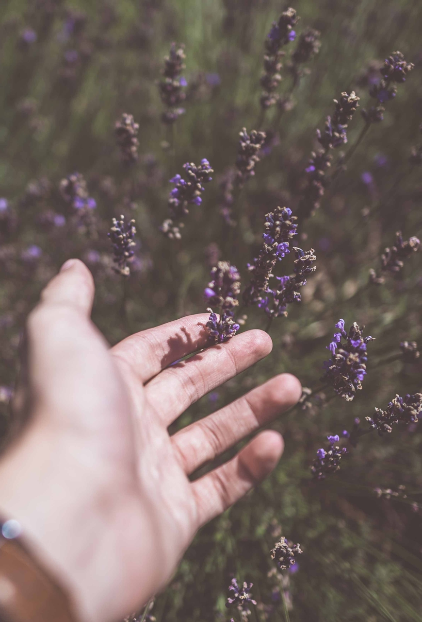 Zrób to sam! Tania woda kwiatowa z olejków eterycznych