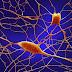 Η άλλη Ελλάδα: Έλληνες «αναπογραμμάτισαν» δερματικά κύτταρα σε νευρώνες....