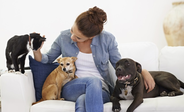Pet Sitting is it Right for your Dog? Australian Dog Lover