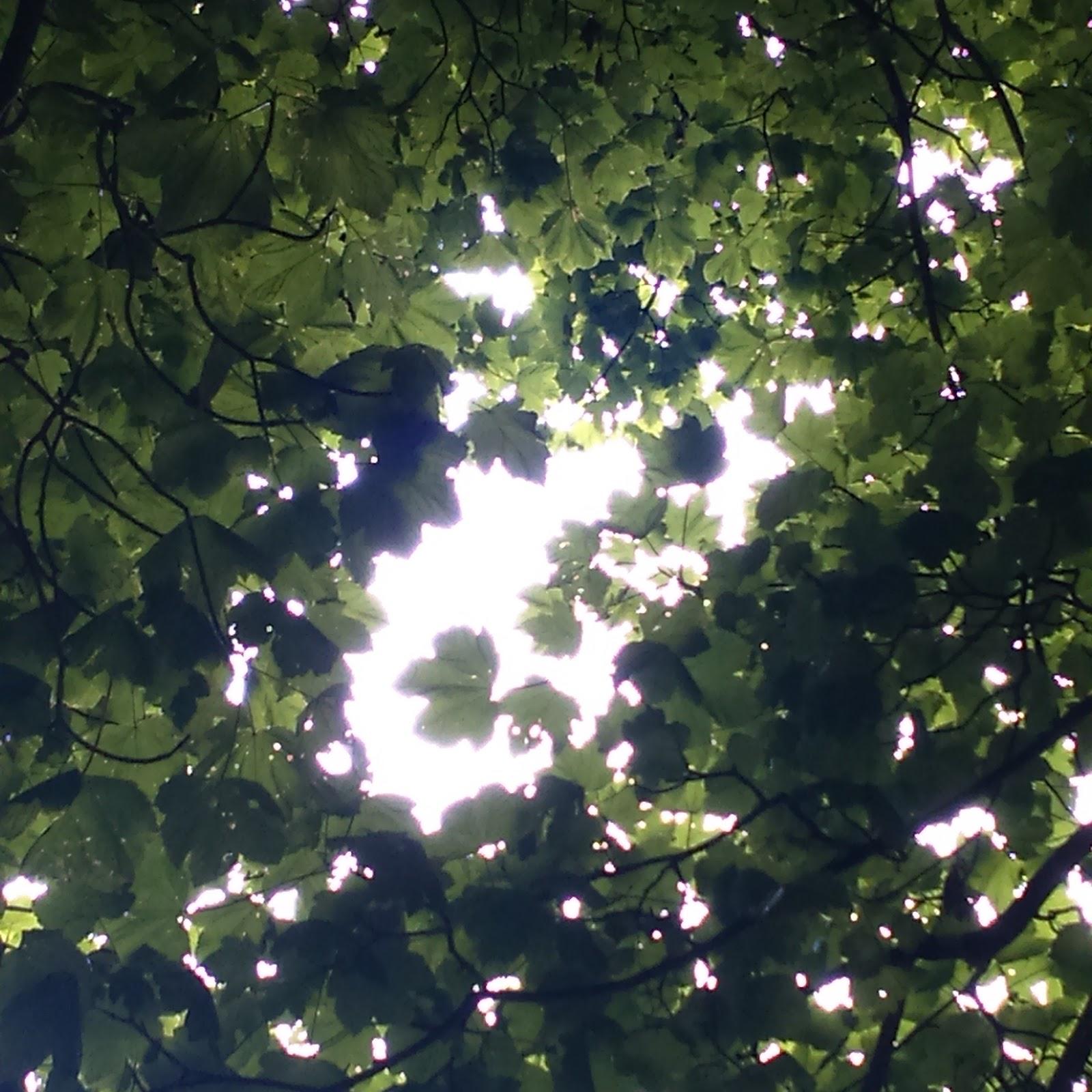 Sunlight through leafy tree canopy