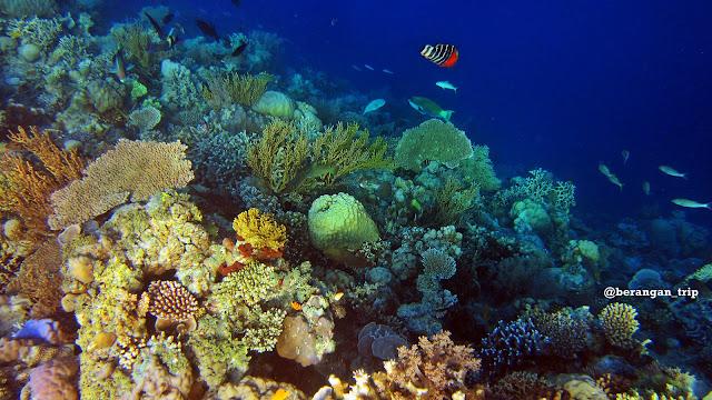 Nikmati Wisata Laut di Taman Laut Takabonerate