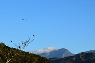 vultures in blue sky