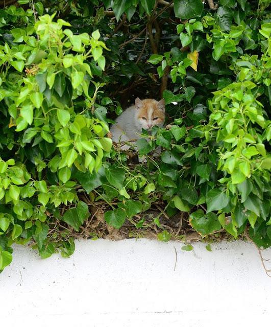 Kỳ lạ chuyện mèo mẹ leo lên cây, đẻ con trong chiếc tổ chim
