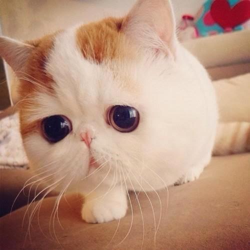 cute cat with big - photo #11