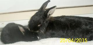 nasze króliczki miniaturki - Mama z Córką