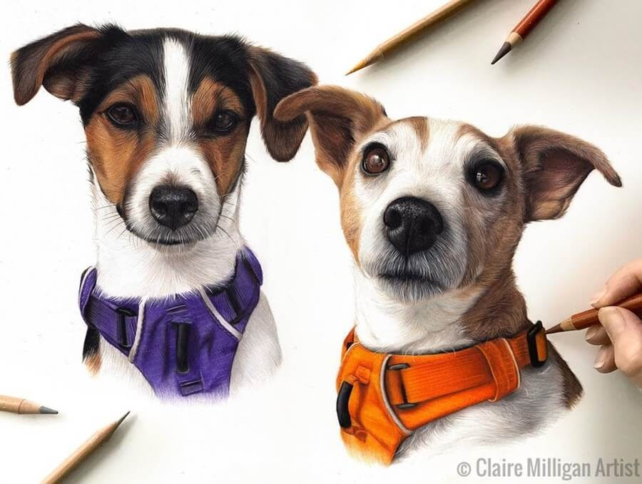 10-Jack-Russell-Terrier-Claire-Milligan-www-designstack-co