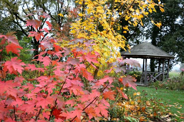 couleurs d'automne au jardin vers la gloriette en bois