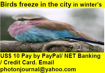 Birds freeze in the city in winter bird story book