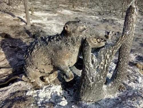 https://www.growideindia.com/2019/08/amazon-forest-fire-hindi.html